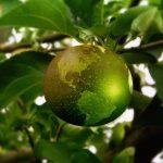 Manger dans une assiette biodégradable pour préserver l'environnement